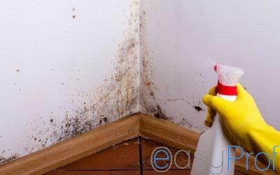 I 4 rimedi naturali per eliminare la muffa dalle vostre case
