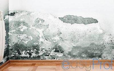 La muffa sui muri è pericolosa e cancerogena, ecco perchè è importante debellarla